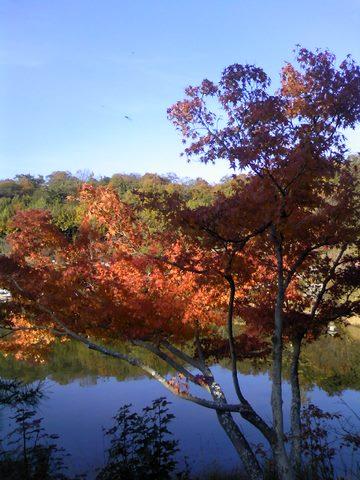モリコロパーク紅葉7