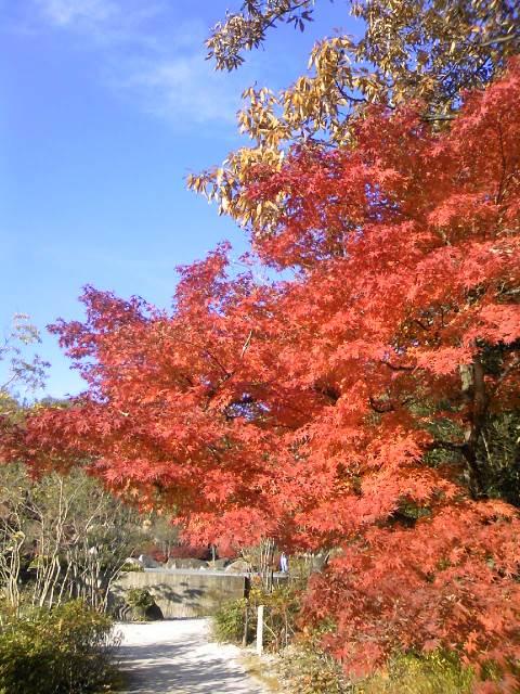 モリコロパーク紅葉2