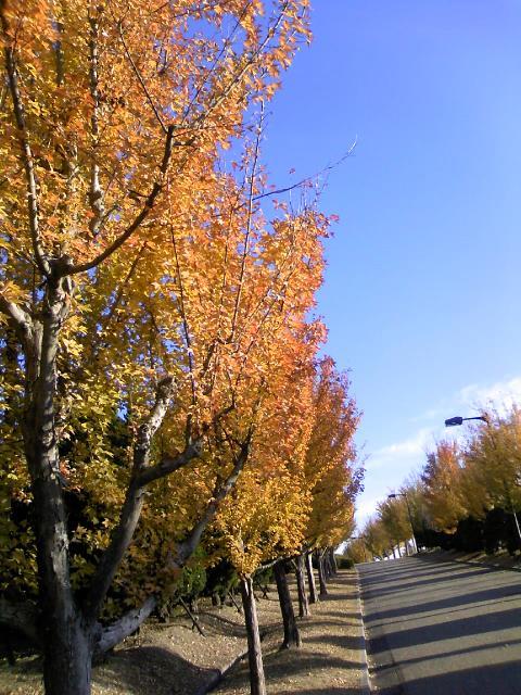 モリコロパーク紅葉