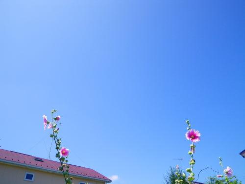 青空710