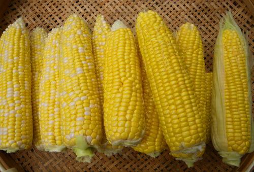 トウモロコシ717の3