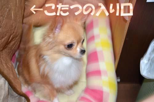 1-5_20111103092735.jpg