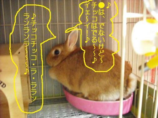 001_20111017095853.jpg