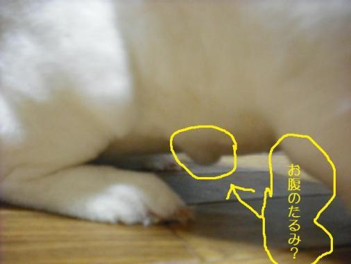 001_20111018071516.jpg