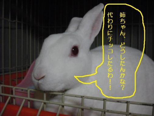 004_20111016080648.jpg