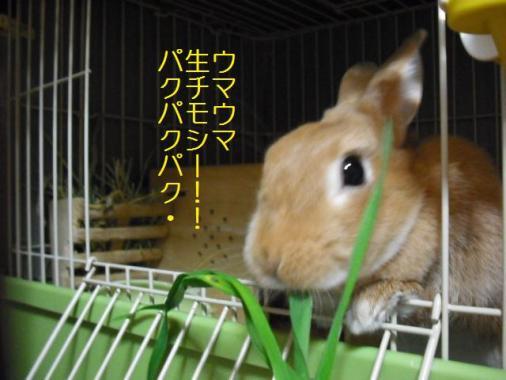 005_20111024111245.jpg