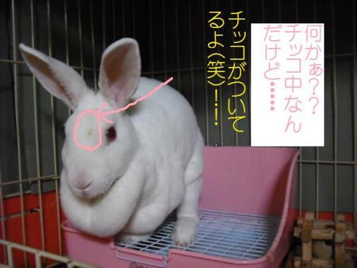 006_20111009074232.jpg
