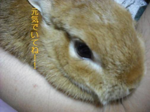 006_20111019072749.jpg