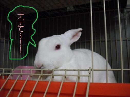 013_20111010071724.jpg