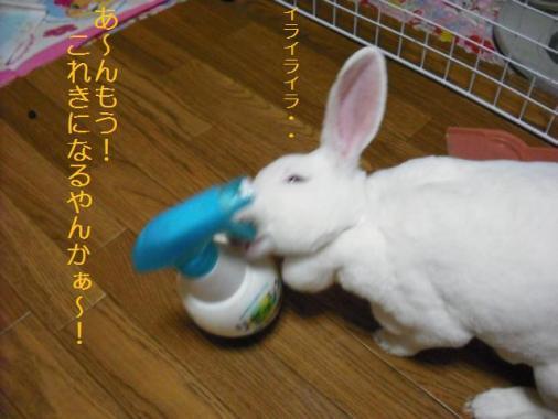 015_20111103073607.jpg