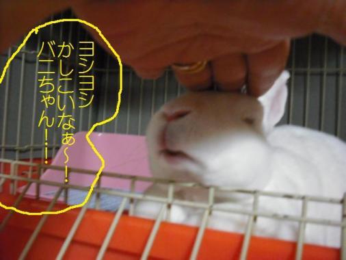 017_20111010071721.jpg