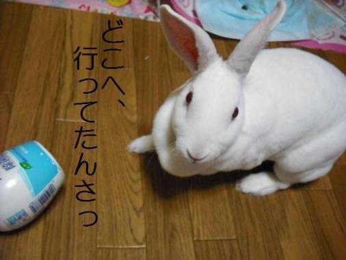 019_20111103073606.jpg