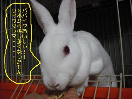 020_20111015072712.jpg