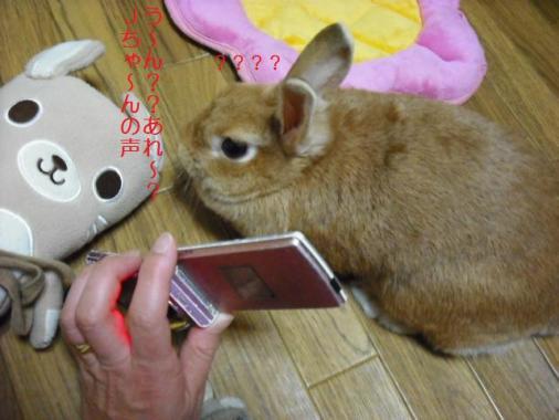 022_20111101073202.jpg