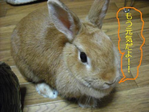 022_20111202092810.jpg