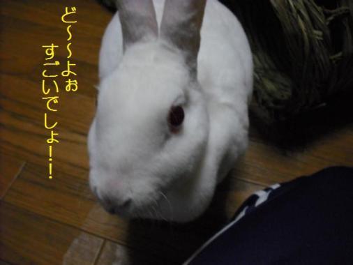 022_20111217072223.jpg