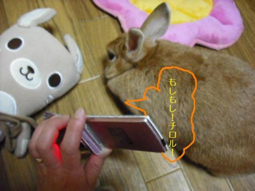 023_20111101073203.jpg