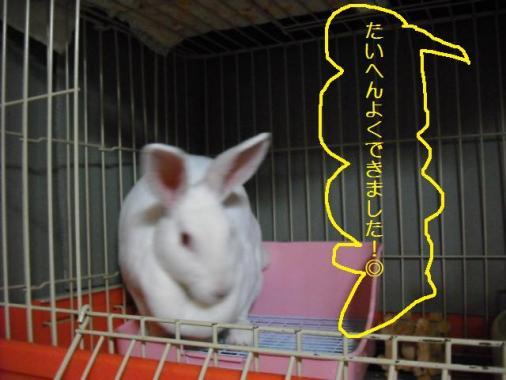 025_20111015072710.jpg