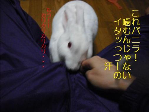 025_20111111074357.jpg
