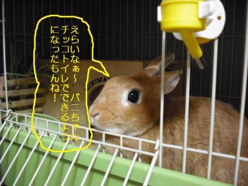028_20111015072834.jpg