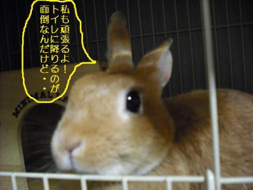 029_20111015072710.jpg