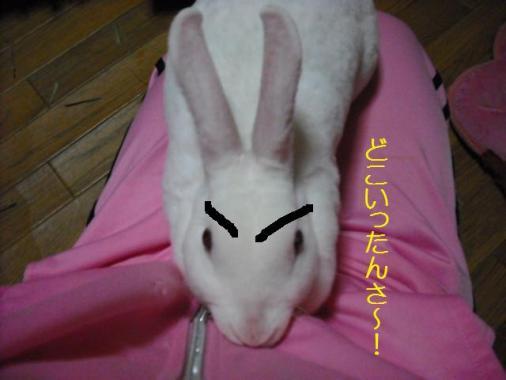 033_20120106083629.jpg