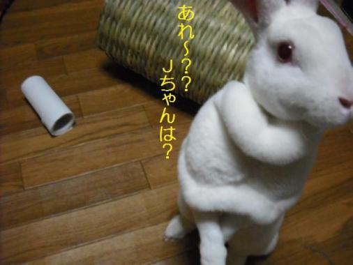 035_20111202093140.jpg