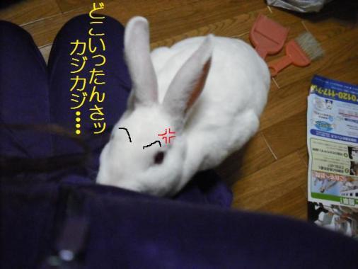 037_20111202093138.jpg