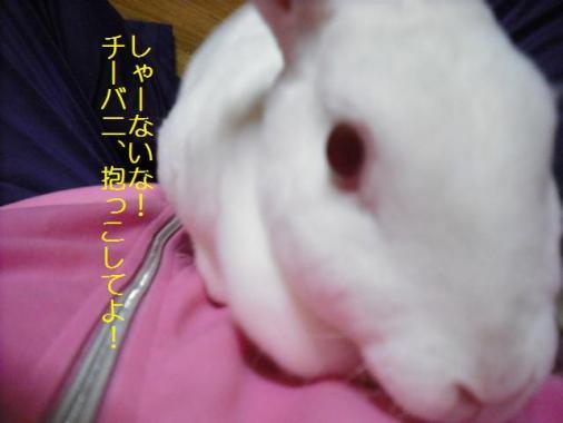 048_20111101073402.jpg