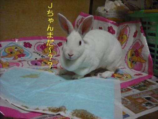 051_20111101073706.jpg