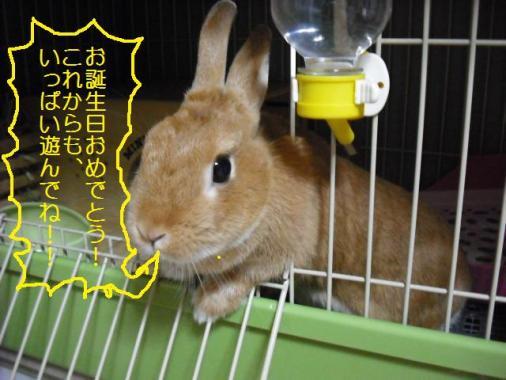 052_20111028105436.jpg