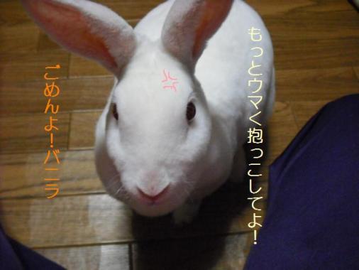 057_20111101073705.jpg