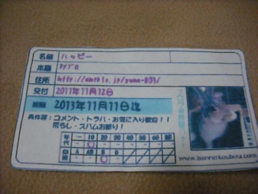 124_20111116063112.jpg