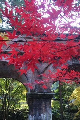 疏水と紅葉