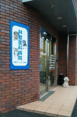 林獣医病院
