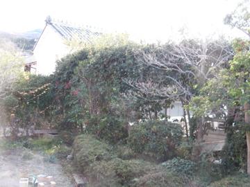 庭木の剪定1