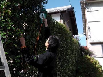 庭木の剪定2