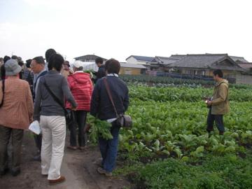 松阪赤菜1