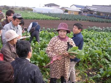松阪赤菜4