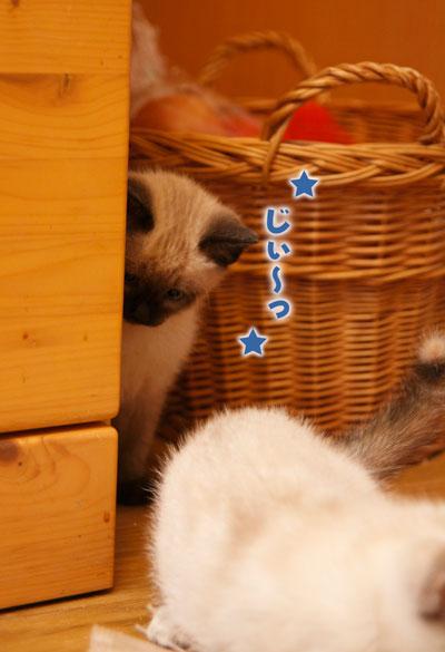 tokisumi_0423_001.jpg