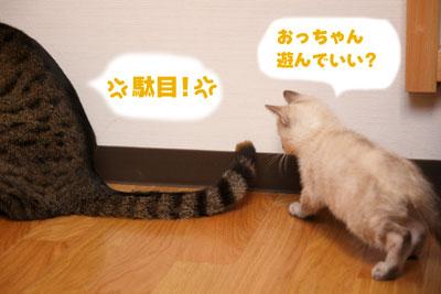 tokisumi_0423_002.jpg