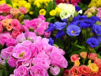 春の花壇苗
