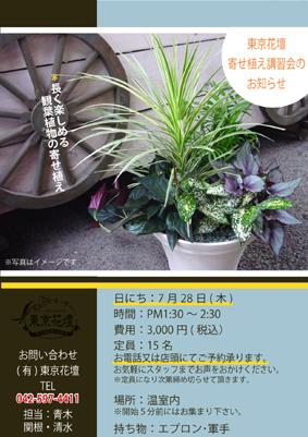 7月は観葉植物!