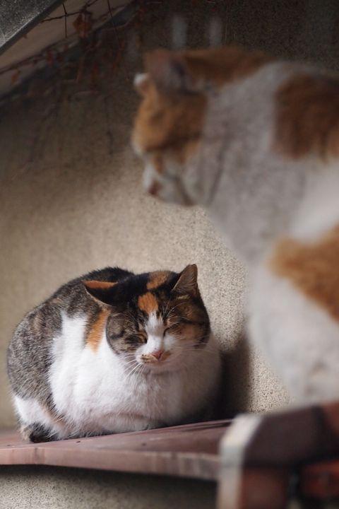 ひろしと姫の雪宿り (C)東京ノラ猫家猫カフェブログ