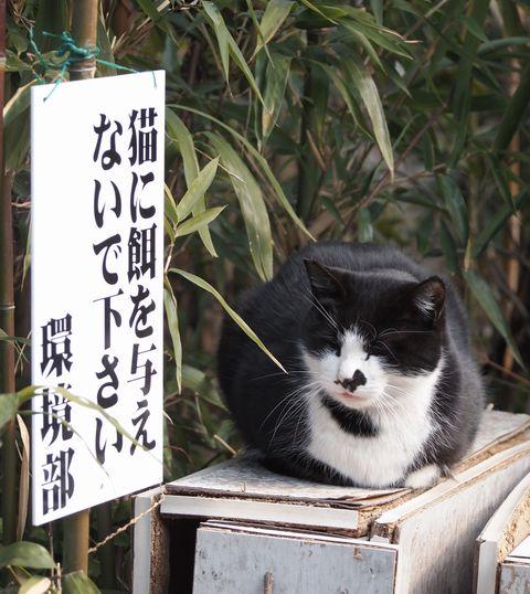 団地の黒ブチ猫 (C)東京ノラ猫家猫カフェ