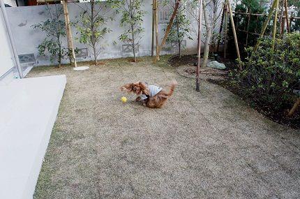 嵐丸 2013.2.22-169