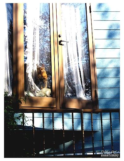 窓の中の猫