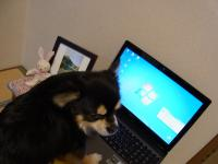 RIMG0016_convert_20120113214417.jpg