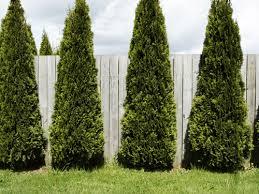 landtrees.jpg