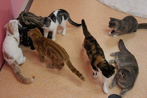 猫カフェ猫スタッフ1